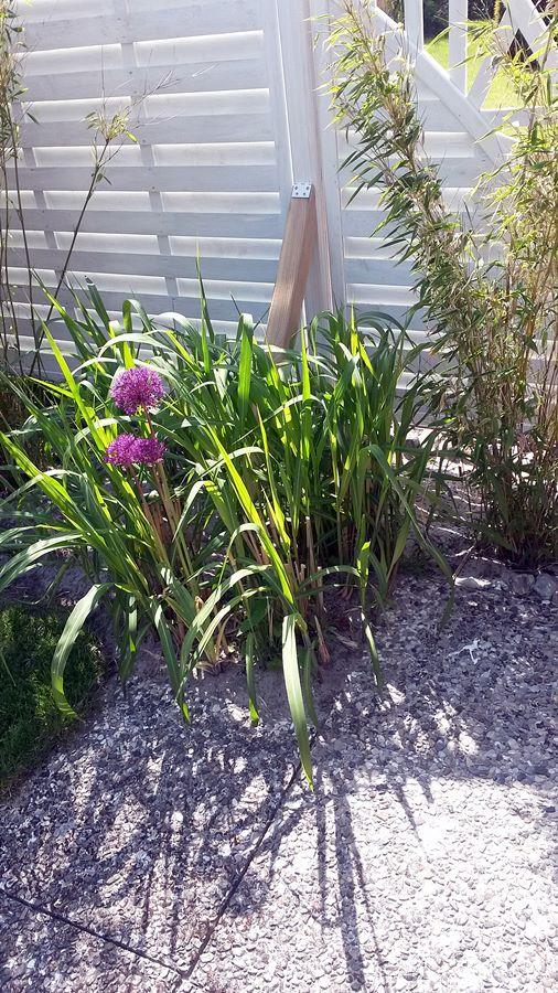 der Garten blüht auf